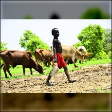 A boy with his cows near the border separating both Sudans.
