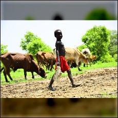 Kekec blizu meje med Sudanoma.