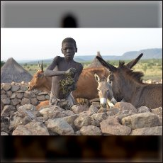 Nuba boy collecting cow shit in the village of Tadoro.