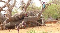 Otroci na drevesu, ki raste naprej četudi se je zrušil